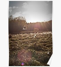 Field of Glimmer Poster