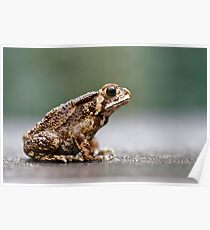 Toad Bufo Poster