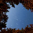Rolley Lake Star trail by Michael Garson