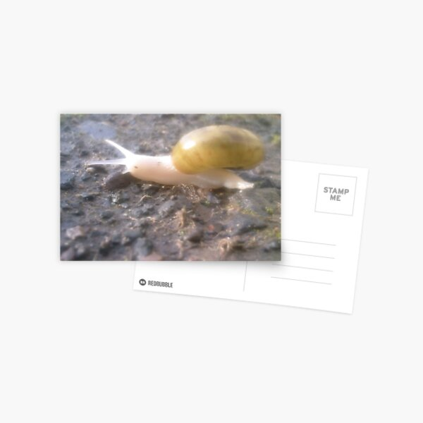 An Albino Snail Crossed My Path Today Postcard