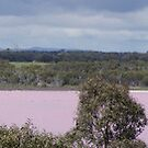 The Pink Lake by wilsonsz