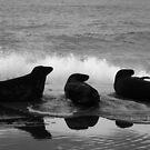 Three Seals by LockwoodEcho