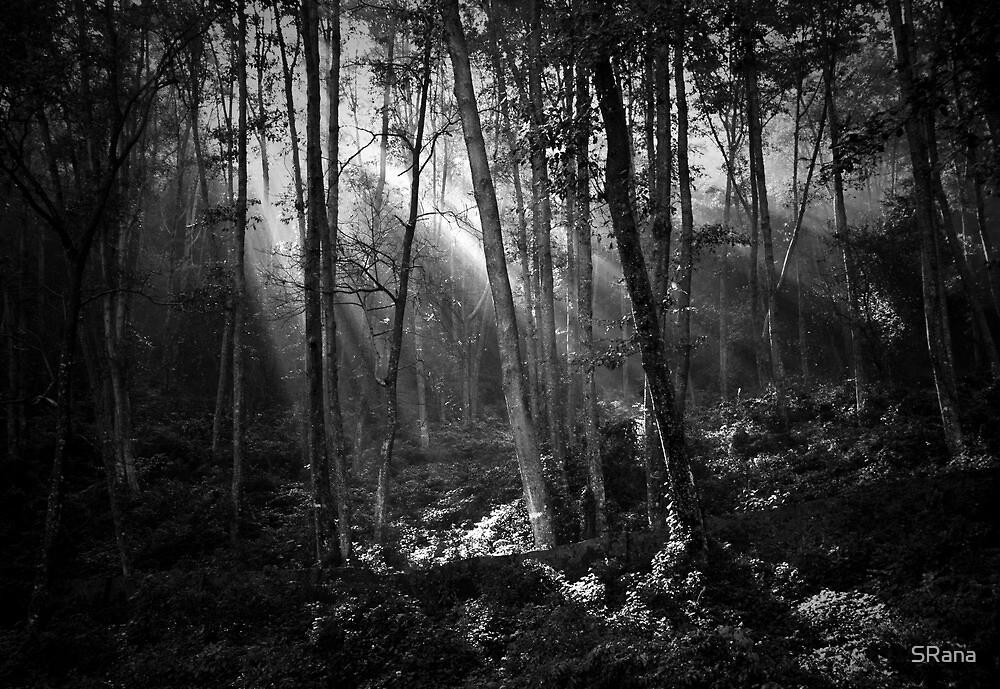streaming light by SRana