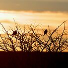 Bird silhouettes by Anthony Thomas