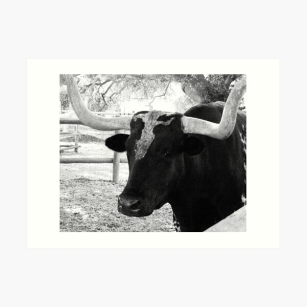 Ox in Black and White Art Print