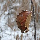 Single flake before the storm by Robin Clifton