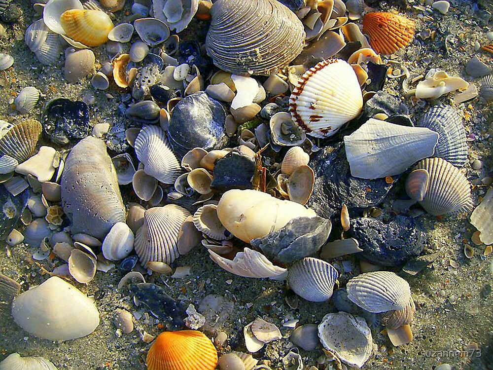 Shell Collection by suzannem73