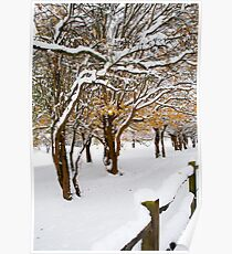 Snowey Branches Poster