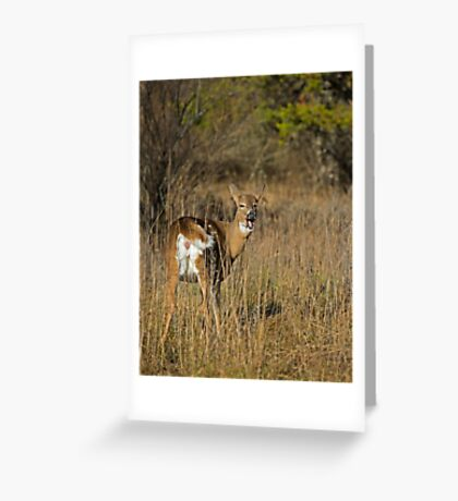 Ready and waiting Greeting Card