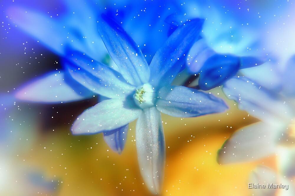 Star Flower by Elaine  Manley