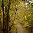 Carolia Creek by Klaus Bohn