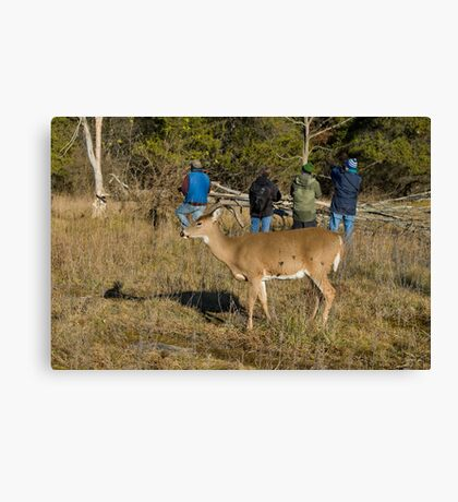 Doe, where is the deer! Canvas Print