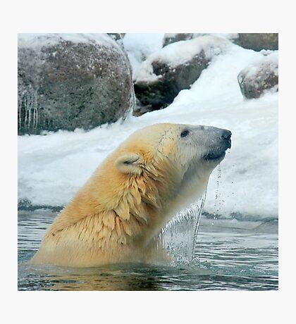 Winter swimming Photographic Print