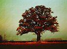 Solitude standing by David Carton