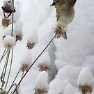 Winter Acrobatics by Arla M. Ruggles