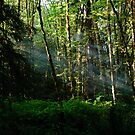 Smoke in the Forest by Michael Garson