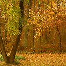 Fall in my Yard by Susan Blevins