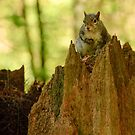 Squirrel on his Thrown by Michael Garson