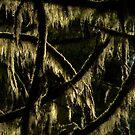 Tree Moss by Michael Garson