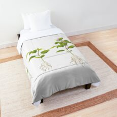 Soybean (Glycine max) plant development Comforter