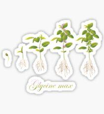 Soybean (Glycine max) plant development Glossy Sticker