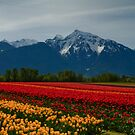 05 may - Tulip Mountain by Michael Garson