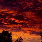 Flaming Skies by Rees Adams