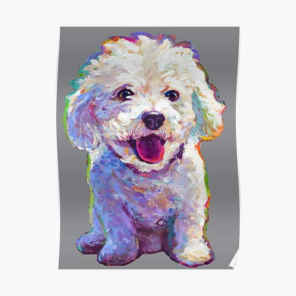 Cute Bichon Frise by Robert Phelps Poster