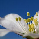 Spring by mrvica