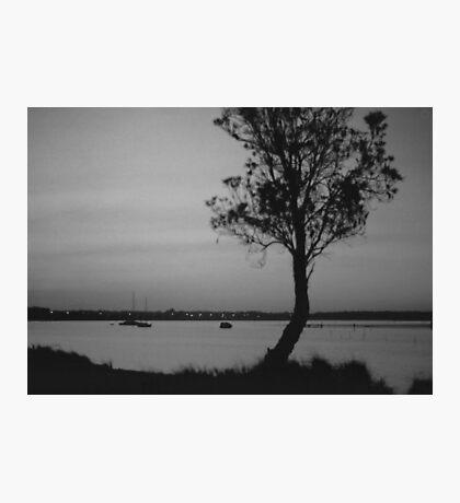 Sheoak Silhouette Photographic Print