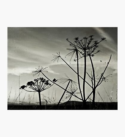 Shell Bay Silhouettes  Photographic Print