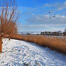 Swans above Kaaskenswater by Adri  Padmos