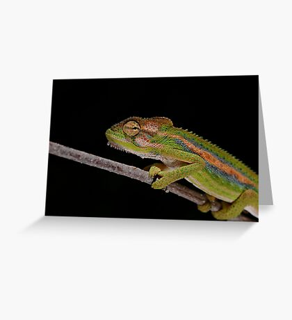 Colourful Greeting Card