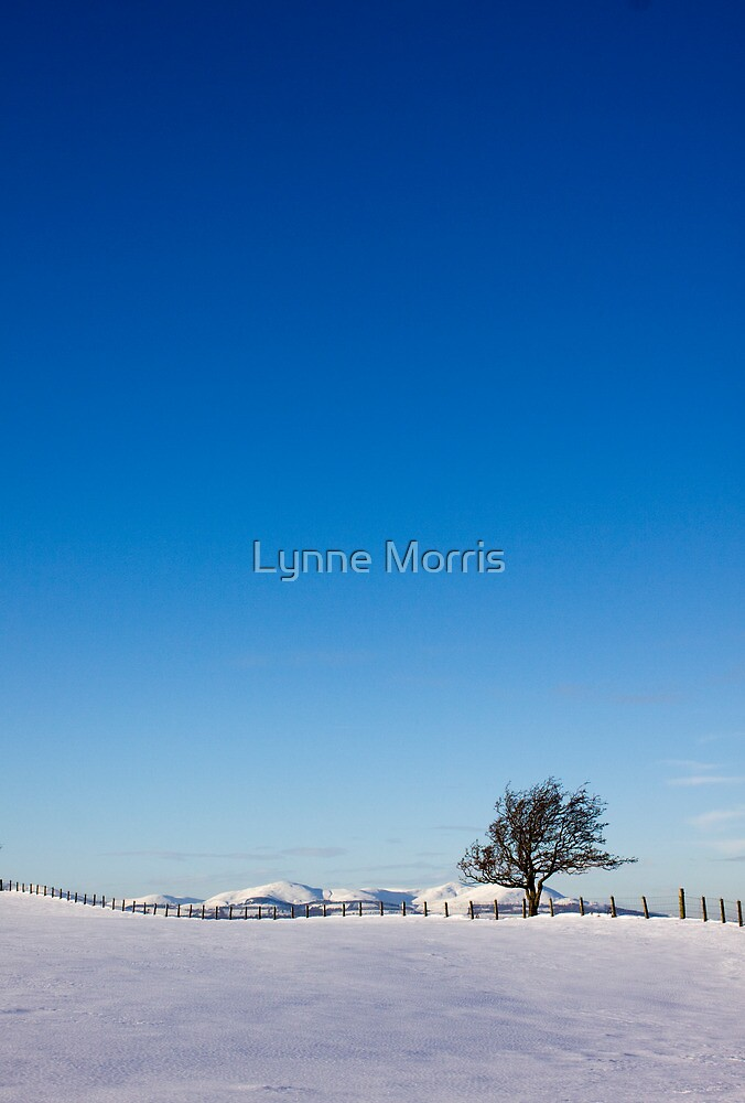 Alone Again, Naturally! by Lynne Morris