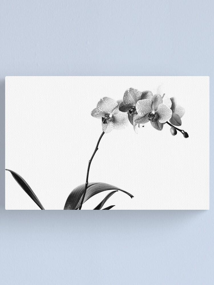 Alternate view of Black Phalaenopsis Canvas Print