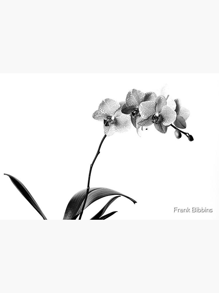 Black Phalaenopsis by organicman2