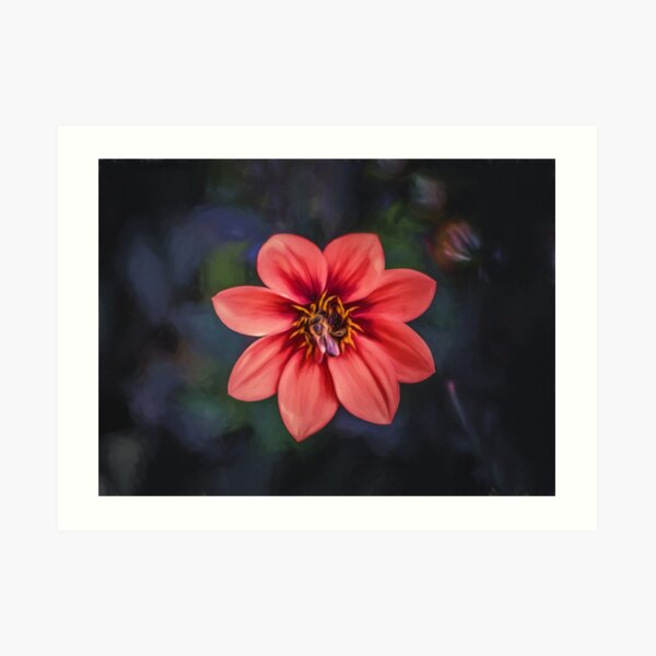 Red Dahlia  (digital painting) Art Print