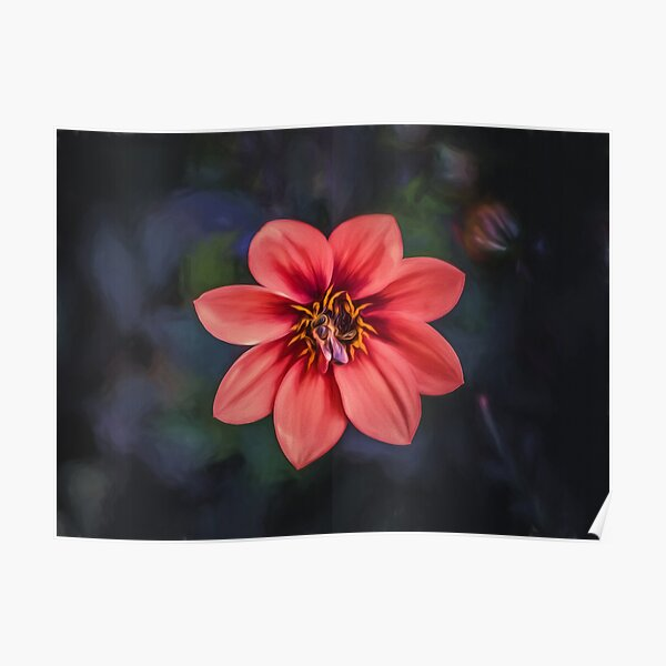 Red Dahlia  (digital painting) Poster