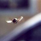 Crazy Fly - II by Roberto Nogueira