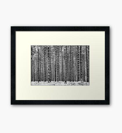 Black & White Pine Framed Print