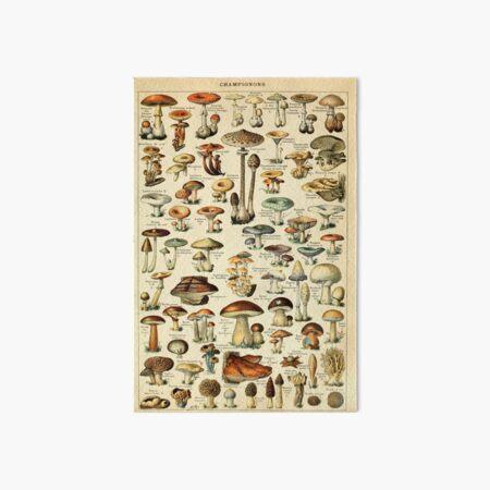 Mushrooms Art Board Print