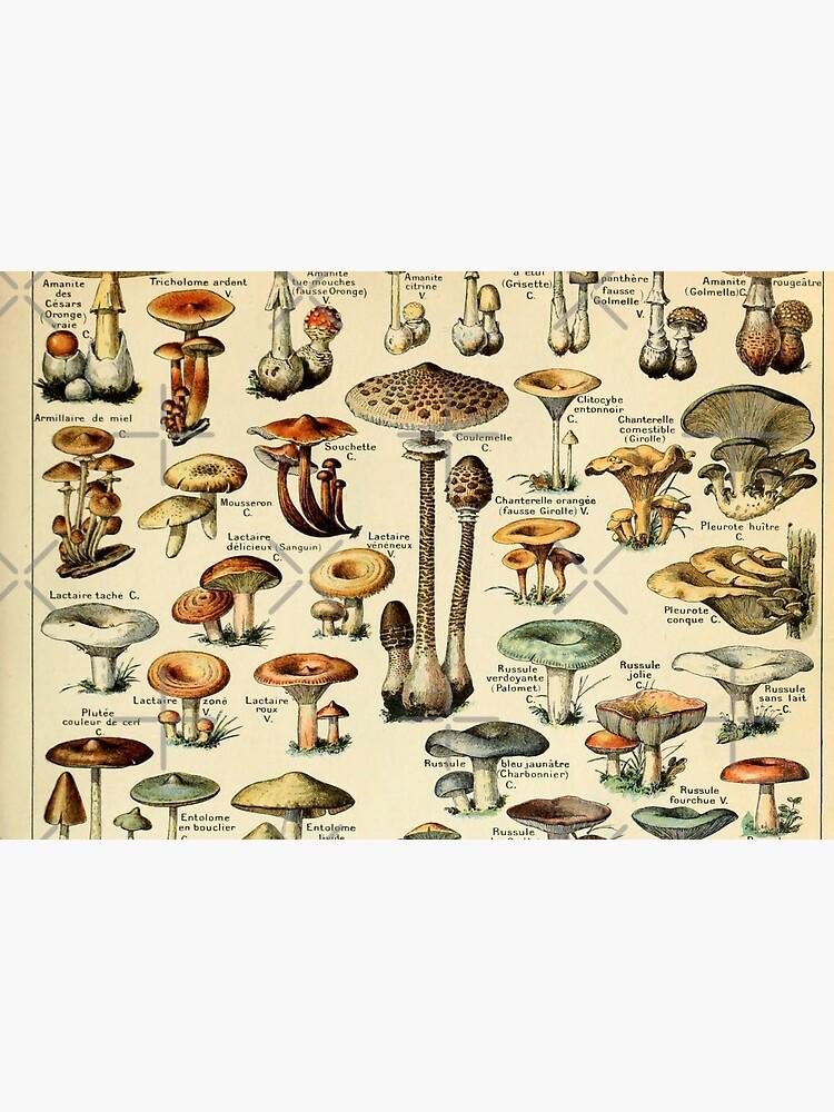 Mushrooms by Salocin
