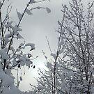 Winter sun by Marie-Eve Boisclair