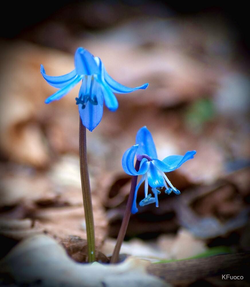 Blue Bells  by KFuoco