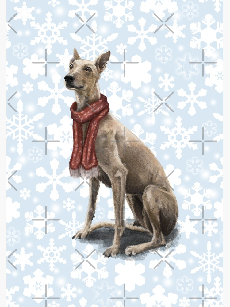 Ruby the Christmas Greyhound by elspethrose