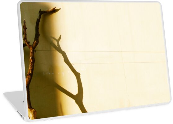 tree with shadow by TalBright