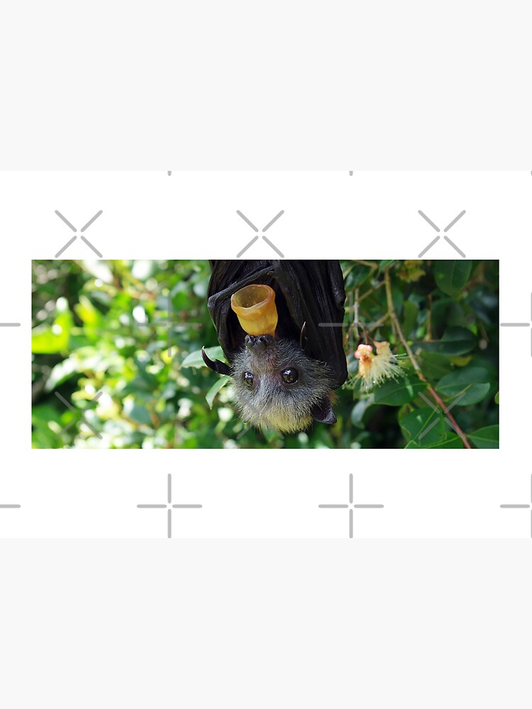 Batzilla - Rescued flying fox bat in tree with pacifier by batzilla