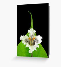 Catalpa Bloom and Leaf, Nature Photography Greeting Card