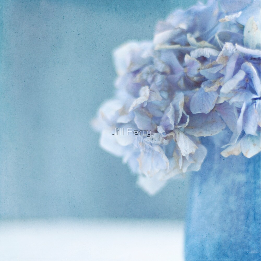 Hydrangea Blues by Jill Ferry