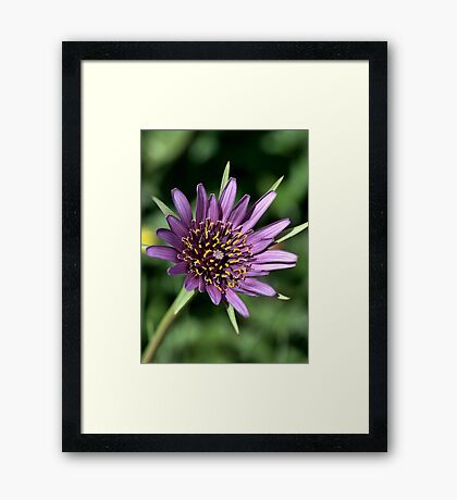 My Colours In Life Framed Print